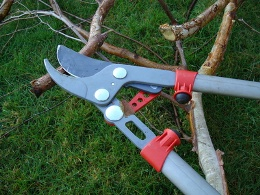 pruning and other garden care services